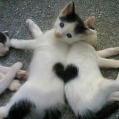 TOP 51 Funny Cats and Kittens Pictures - Tierbilder - Katzen Cute Little Animals, Cute Funny Animals, Funny Cats, Funniest Animals, Funny Squirrel, Cats Humor, Silly Cats, Photo Chat, Cat People