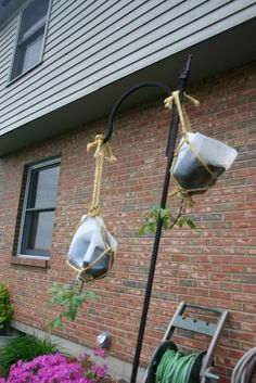 Growing Tomatoes Upside Down Another useful way to reuse plastic milk jugs or cartons! Upside down tomato planters! Upside Down Plants, Upside Down Tomato Planter, Reuse Plastic Bottles, Plastic Milk, Garden Soil, Garden Planters, Gardening, Cactus Seeds, Tomato Farming