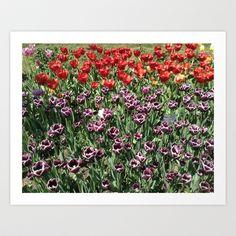Tulip Garden 1 Art Print by DiAnne Ferrer - $16.00