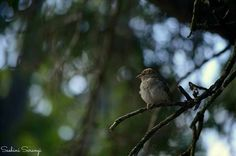 #New_Zealand #CRCH #Photography #Birds #Nature