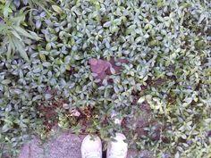 #synchroonkijken 2015, dag 7, waar sta ik...... ?  Ik sta in de tuin bij mijn ouders en als je goed kijkt, zie je tussen het groen een bruin plastic hertje met haar jong. Die is al héél oud, maar staat nog steeds op deze plek.