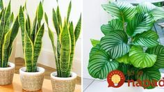 12 houseplants that can survive even the darkest corner - House Plants - ideas of House Plants - Plants that are perfect for dark places like an office or home with little light.