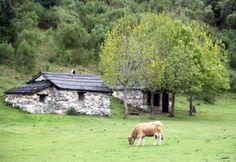 Fotos Brañagallones en parque de Redes Asturias