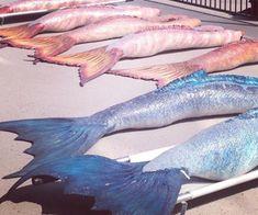Mako mermaids on We Heart It Realistic Mermaid Tails, Diy Mermaid Tail, Silicone Mermaid Tails, Mako Mermaids Tails, H2o Mermaids, Mermaid Wallpapers, Merman, Dream Nails, Mythical Creatures