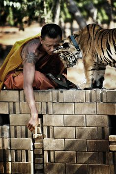 Monk and Tiger, Tiger Temple sanctuary in Thialand.