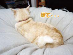 連写猫!|うにオフィシャルブログ「うにの秘密基地」Powered by Ameba