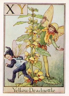 This beautiful Yellow Deadnettle Alphabet Flower Fairy Vintage Print by Cicely Mary Barker was printed c.1940 and is an original book plate from an early Flower Fairy book. Cicely Barker created 168 flower fairy illustrations in total for her many books