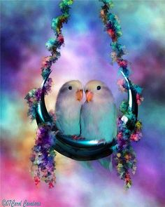 Pictures of Lovebirds and Love Bird Gifts Pretty Birds, Love Birds, Beautiful Birds, Animals Beautiful, Simply Beautiful, Beautiful Images, Gif Animé, Animated Gif, Animation