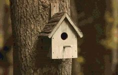 What Happens Inside A Bird House