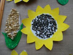 kukuřice - pop corn, slunečnice - semínka