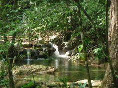 Selva Lacandona.