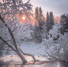 Frozen Lake | The Northern Tundra