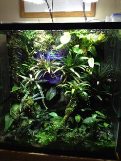Unbenannt | Flickr - Fotosharing! Gecko Terrarium, Orchid Terrarium, Aquarium Terrarium, Tropical Terrariums, Aquarium Aquascape, Vivarium, Planted Aquarium, Rabbit Cages, Gardens