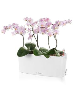 Mini planter for orchids, African violets and other small plants. Self-watering so plants thrive and you water less often. Modern Planters, Indoor Planters, Growing Orchids, Self Watering Planter, Orchid Care, Plant Needs, Window Sill, Window Boxes, Growing Herbs