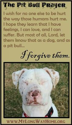 The Pit bull Prayer. I wish for no one else to be hurt The way those humans hurt me. I hope that they learn that I have feelings, That I can love and I can suffer. But most of all, Lord,Let them know that as the dog and as a pitbull. I forgive them. I Love Dogs, Puppy Love, Cute Dogs, Animals And Pets, Cute Animals, Baby Animals, She Wolf, Dog Fighting, Pit Bull Love