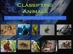 Classification of Animals: Invertebrates and Vertebrates (mammals, fish, birds, reptiles, and amphibians). This 36 page Powerpoint presentation covers all of those animals and much more. More than just a series of informative slides, this educational package contains higher level thinking activities, riddles, and diagrams to keep the students engaged.
