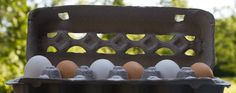 Best-Food-Facts-Egg-Carton
