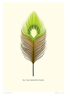 Check out Kiwi Feather Print by Glenn Jones at New Zealand Fine Prints