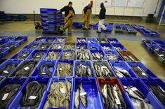 bacs alimentaires à poisson pour présentation de criée