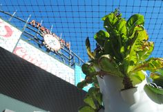 Baseball with a side of kale: The San Francisco Giants Garden   Inhabitat - Sustainable Design Innovation, Eco Architecture, Green Building