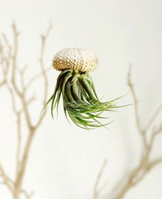 Gold OMBRE Jellyfish Air Plant // Sea Urchin Wedding by PetitBeast