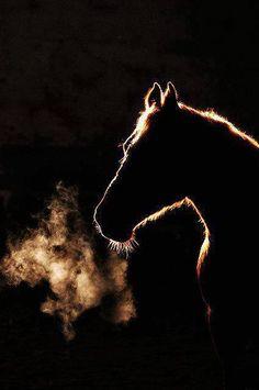 Horse breath...so warm & gentle... <3