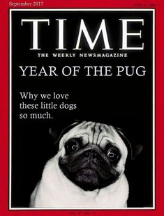Pugs are Pugliciously precious In every way! #pug