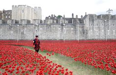 Nick Ansell/PA Wire Yeoman Serjeant Bob Loughlin walks through a mass of ceramic poppies which form part of the art installation 'Blood Swept Lands and Seas of Red' by artist Paul Cummins at the Tower of London, as the Historic Royal Palaces, Tower of London, prepares to mark the centenary of World War I.
