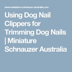 Using Dog Nail Clippers for Trimming Dog Nails | Miniature Schnauzer Australia
