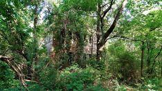 Caddo Parish Pea Farm Shreveport Caddo Parish, Abandoned, Plants, Left Out, Plant, Ruin, Planets