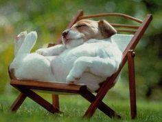 sommer | Tiere im Sommer: Sonnenbad, Pool – oder beides? - Seite 1