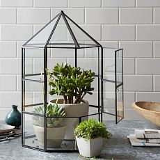 Love the look of putting plants in a mini greenhouse.