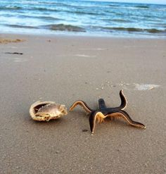Live starfish on the beach so cool