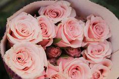 pink roses #pink #brayola