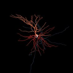 Brain Neurons, Psychology Resources, Minding Your Own Business, Mad Science, Neurology, Data Visualization, Beautiful Creatures, Biology, Sculptures
