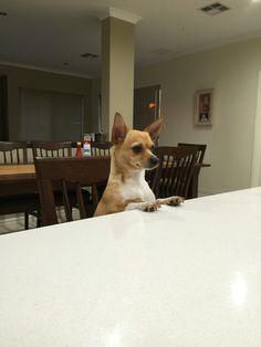 My furbaby Skylar watching me prepare dinner hoping she'll get a bit❤️