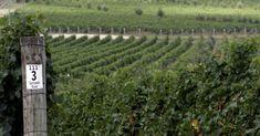 Alle vinregioner utenfor Europa betegnes i vinuniverset som «den nye verden». Og for en verden! Nye, Vineyard, Outdoor, Outdoors, Vine Yard, Vineyard Vines, Outdoor Living, Garden