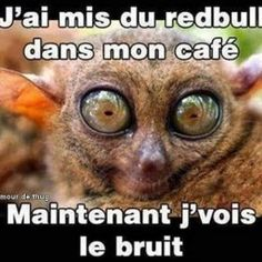 j'ai mis du redbull dans mon café Funny Cats, Funny Animals, Funny Jokes, Turn Down For What, Minions, Lol, Pokemon, Laughing And Crying, Jokes Quotes