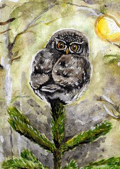 Eurasian Pygmy Owl painting by Alicia Sivertsson, 2015 (detail). Aquarelle on paper.