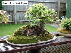 Hobbit . . . Bonsai + lindo que já vi .. dá vontade de mudar para lá !