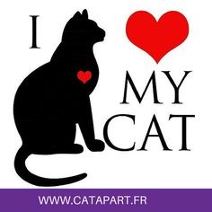 #chat #chaton #citation I love my cat