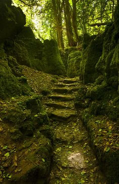 visitheworld:  A lovely spot within the Forest of Dean, Gloucestershire, England (by cdmonson).