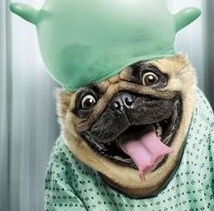 PetsLady's Pick: Funny Animal Of The Day