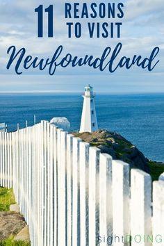 11 Reasons to Visit Newfoundland Canada at Least Once - Newfoundland Canada, Newfoundland And Labrador, Visit Canada, Canada Canada, Alberta Canada, East Coast Road Trip, Atlantic Canada, Ireland Travel, Weekend Trips