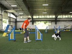 """This compilation of animated photos illustrates Figure 3 in Mary Ellen Barry's article, """"As the World Turns: Forced Front Cross (a. Agility Training, Dog Agility, Training Videos, How To Run Faster, Maps, Events, Youtube, Pet Dogs, Blue Prints"""
