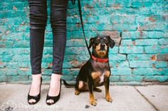 Nashville Pet Photography | Andrea & Oliver #petphotography
