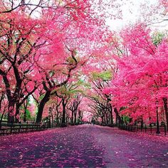 Pink Central park in NYC- credit to @nois7