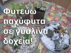 gimayhiu - 0 results for holiday Fairy Garden Pots, Garden Plants, Holiday Parties, Holiday Decor, Free To Use Images, Trees To Plant, Christmas Bulbs, Cactus, Succulents