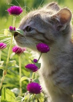 Smelling the flowers http://amzn.to/2k2HTMQ