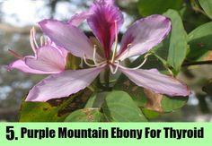 Purple Mountain Ebony